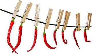 Chilis trocknen und konservieren um sie haltbar zu machen - Peperoni trocknen