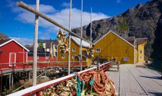 Stockfisch in der neuen, aber auch traditionellen nordischen und skandinavischen Küche