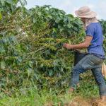 Was ist Fairtrade und Organic?