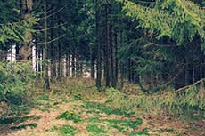 Wald im Harz