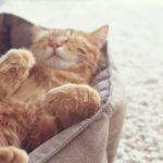 Anschaffung einer Katze: Fragen, Antworten und Informationen