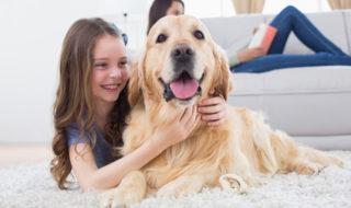 Ratgeber zur Anschaffung eines Hundes