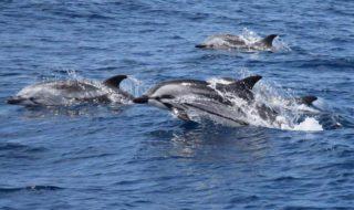 Ausflüge zu Walen & Delfinen auf Gran Canaria