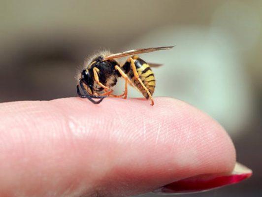 hausmittel gegen insektenstiche erste hilfe bei insektenstichen socko. Black Bedroom Furniture Sets. Home Design Ideas