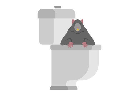 Toilette: Ratte im Haus