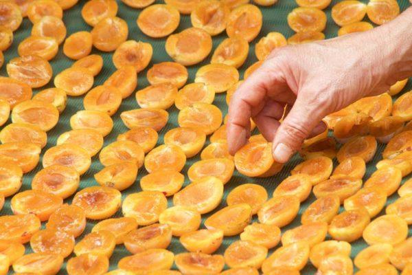 Früchte trocknen & dörren