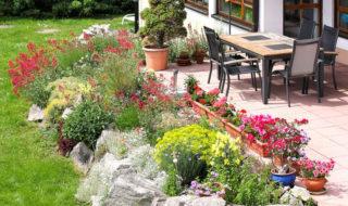 Winterharte Pflanzen für den Steingarten